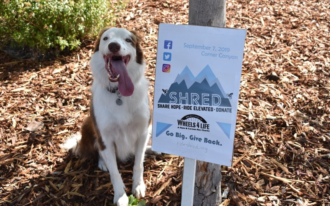 SHRED fundraising event