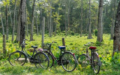 Bikes in the Wild – Chitwan, Nepal